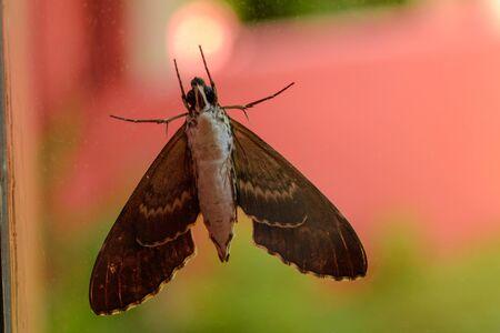 Gray moth close-up through the window glass. Reklamní fotografie