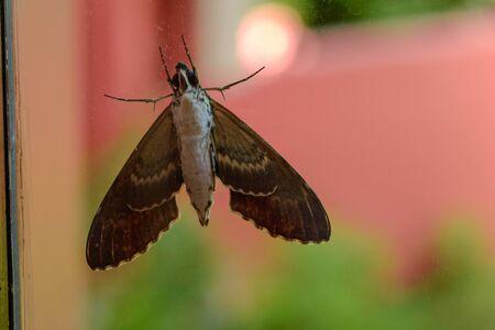Gray moth close-up through the window glass. Banco de Imagens