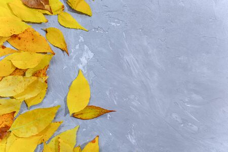 Frame of bright colorful fallen autumn leaves.