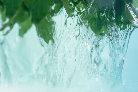 Water jets flowing from the green fresh leaves of mint. Stok Fotoğraf