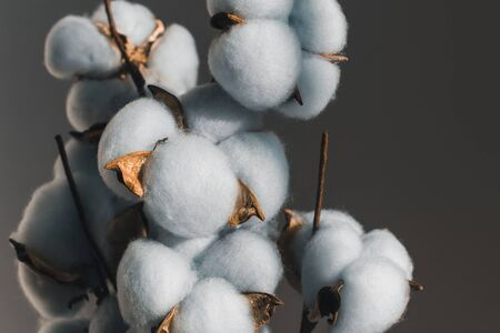 A bouquet of cotton on a wooden table. Stok Fotoğraf