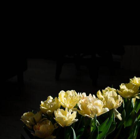 Macro photo of yellow tulips.