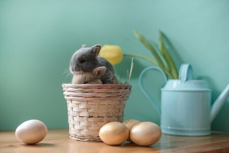 Easter still life with little rabbits in a basket. Banque d'images - 140890350