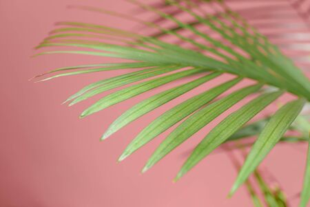 Beautiful green palm branches illuminated by the sun.