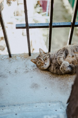 tabby cat resting lying on a balcony