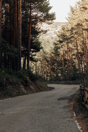 road between pines in the mountains in the north of Spain