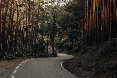 road in the middle of the forest in the mountains of Madrid