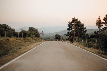 horses walking on the road between the mountains in the north of Madrid, Spain
