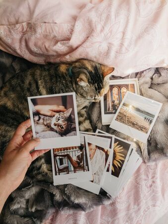 tabby cat lying down comfortably in bed and several retro photos