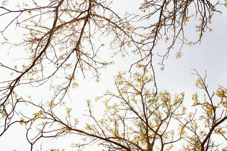Bare tree branches with flowers and leaves sprouting on a pale white background Stock Photo