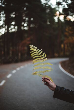 Womans hand holding fern leaf against autumnal forest road. Seasonal and travel concept. The colors and mood of autumn.