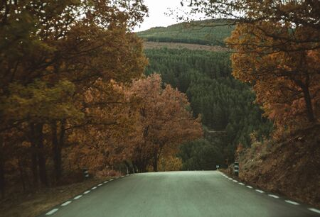 Sunbeams in Autumnal road in the forest. Tree, leaves. Travel and explore concept. Imagens