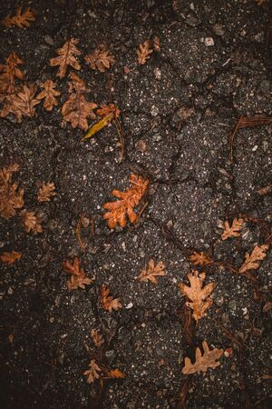 Autumn background. Dry orange foliage lying on asphalt. Fallen oak leaves on road. Autumnal concept.