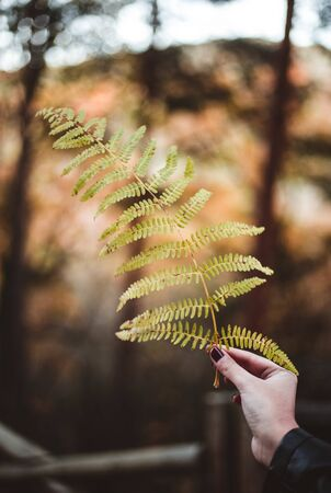 Woman hand holding green fern leaf against autumnal forest. Seasonal concept. The colors and mood of autumn. Travel concept Фото со стока