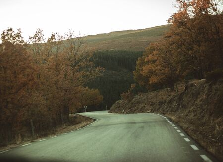 Autumnal road in the forest. Tree, leaves. Travel and explore concept.