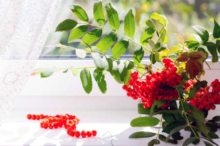 mountain ash: Autumn view from the window, a branch of a mountain ash in glass vase and rowan beads. Selective focus.