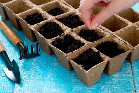 Gardening and landscaping - preparation for planting seeds, garden tools.