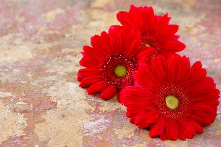 home accents: Red flower gerbera daisy on a wooden vintage background. Space for your text.
