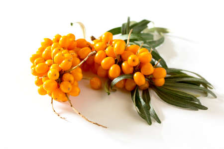 argousier: Buckthorn berries branch on a white background. Banque d'images