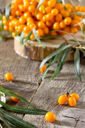 argousier: Argousier baies branche sur fond de bois vintage. fond d'automne.