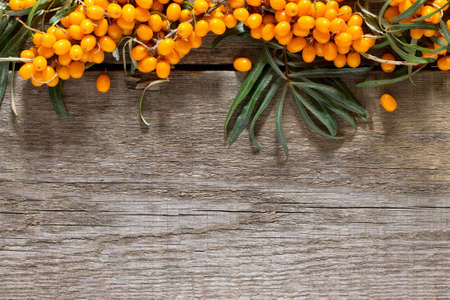 thorn: Seabuckthorn berries branch on vintage wooden background. Top view, place for your text.