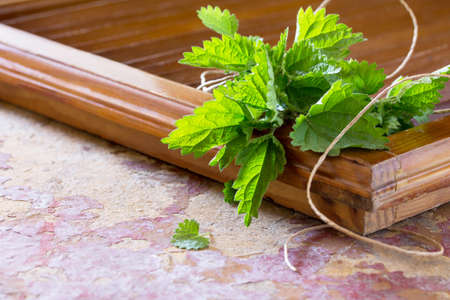 inflammatory: Medicinal plant fresh leaves of nettles, selective focus. Fresh nettle leaf on the kitchen table a rustic background. Stock Photo