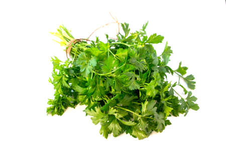 Fresh parsley isolated on white background, tied with rope.