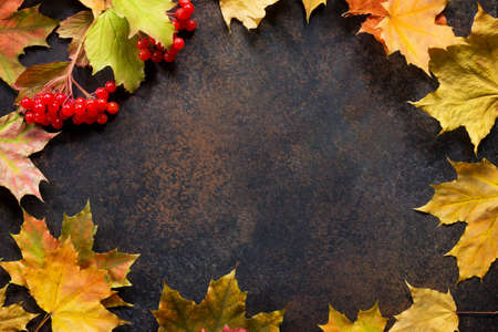 Autumn motive. Autumn background with autumn maple red and orange leaves and berries on  slate background. Top view flat lay background with copy space.