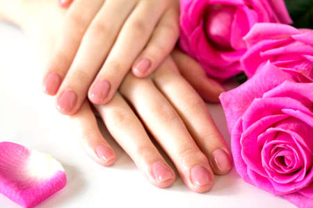 Beautiful manicured womans nails with pink polish isolated. Manicure, pedicure beauty salon. Beautiful rose red blossoms.
