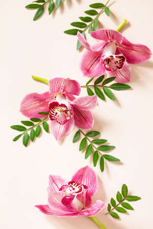 Elegant floral abstract background. Tropical pink phalaenopsis orchids on a light Pastel background. Top view flat lay.