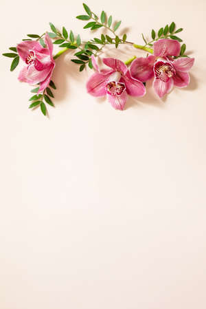 Elegant floral abstract background. Tropical pink phalaenopsis orchids on a light Pastel background. Top view flat lay. Frame for text, copy space. 免版税图像