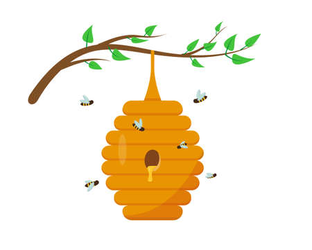 Bee hive with honey on the tree branch with leaves. Bee house and insect in nature. Vector illustration on white background.