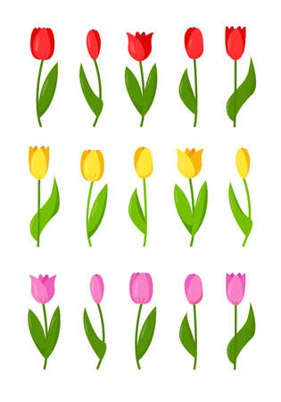 Set of red, yellow and purple tulips. Flower elements for spring or festive design. Vector illustration isolated on white background.