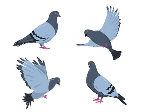 Pigeon birds set. Doves in different poses isolated on white background. Vector illustration.