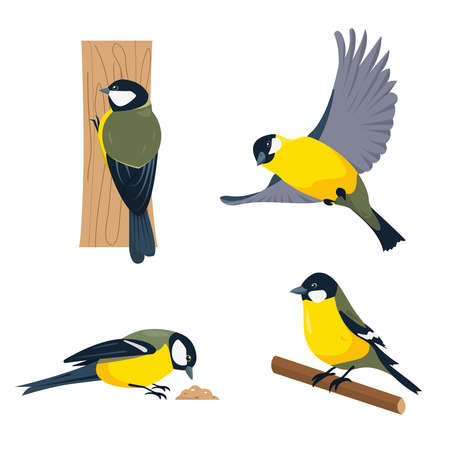 Set of tit birds in different poses isolated on white background. Vector illustration.