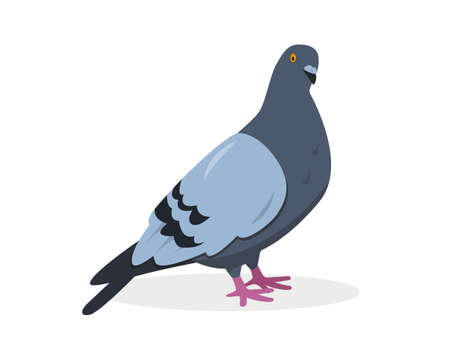 Pigeon bird. Gray dove icon vector illustration isolated on white background.  イラスト・ベクター素材
