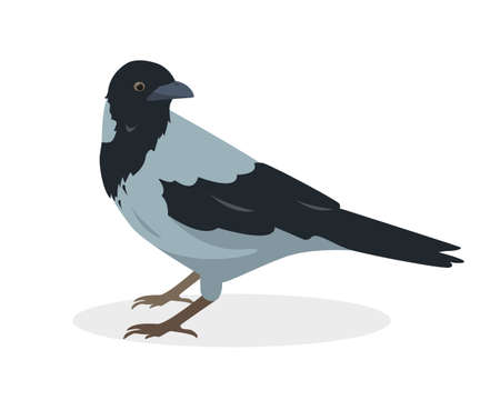 Crow bird icon isolated on white background. Gray crow. Vector illustration.  イラスト・ベクター素材