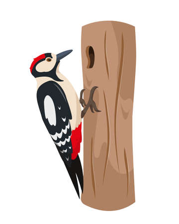 Woodpecker bird on tree trunk. Colorful woodland animal icon. Vector illustration isolated on white background.