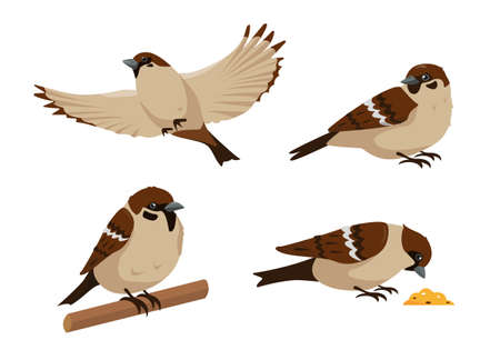 Set of sparrows in different poses isolated on white background. Collection of sparrow birds icons vector illustration.  イラスト・ベクター素材