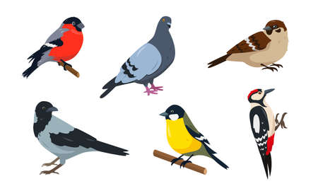 City birds icons set. Bullfinch, Sparrow, Tit, Woodpecker, Pegeon and Crow. Birds in different poses isolated on white background. Vector illustration.