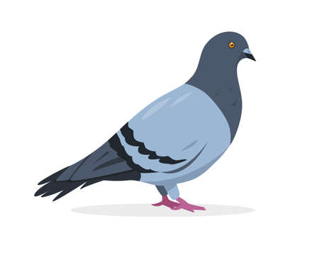 Pigeon bird icon. Grey dove vector illustration isolated on white background.