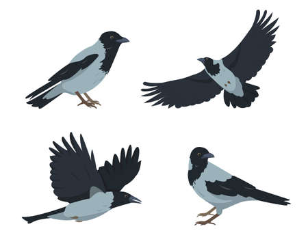 Crow birds set in different poses isolated  イラスト・ベクター素材