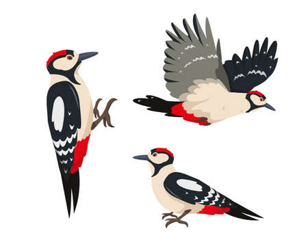 Set of Bright woodpeckers in different poses  イラスト・ベクター素材
