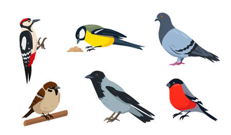 City birds in different poses isolated on white background.  イラスト・ベクター素材