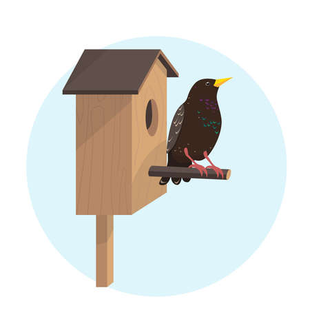 Bright starling bird on birdhouse in cartoon style