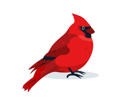 Red Cardinal bird icon. Cute small winter Bird icon isolated on white background. Vector illustration for ornithology or nature design.
