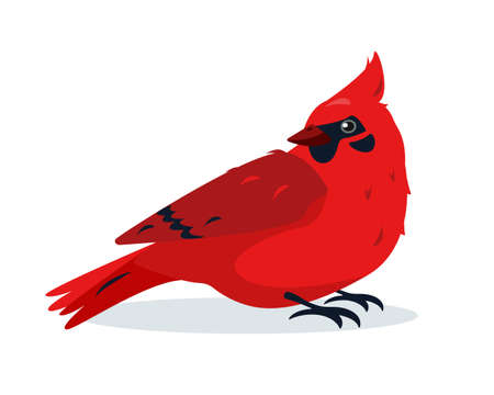 Red Cardinal bird. Cute small bright Bird icon isolated on white background. Vector illustration for ornithology or nature design.