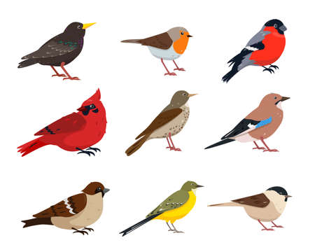 Small Birds collection. Sparrow, thrush, wagtail, red cardinal, robin, jay, chickadee, bullfinch and starling bird in different poses. Vector icons illustration isolated on white background.