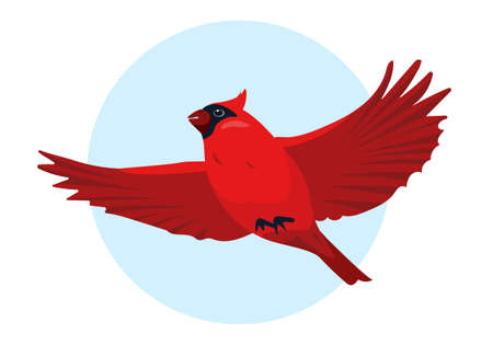Red Cardinal bird flying in sky. Cute small bright Bird icon. Vector illustration for ornithology or nature design. Vektorové ilustrace