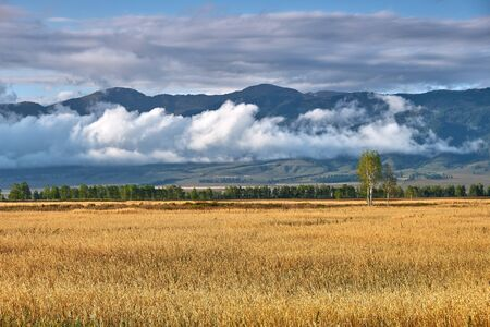 Field, mountains and clouds. Evening landscape after rain